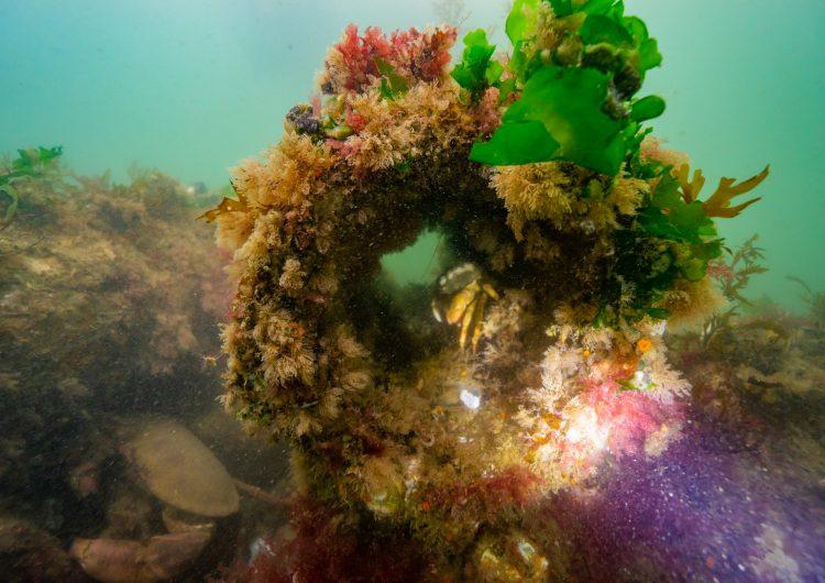 ReefSystems – Underwater nature enhancing solutions