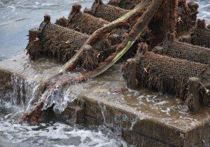 Borssele III & IV oyster project promising